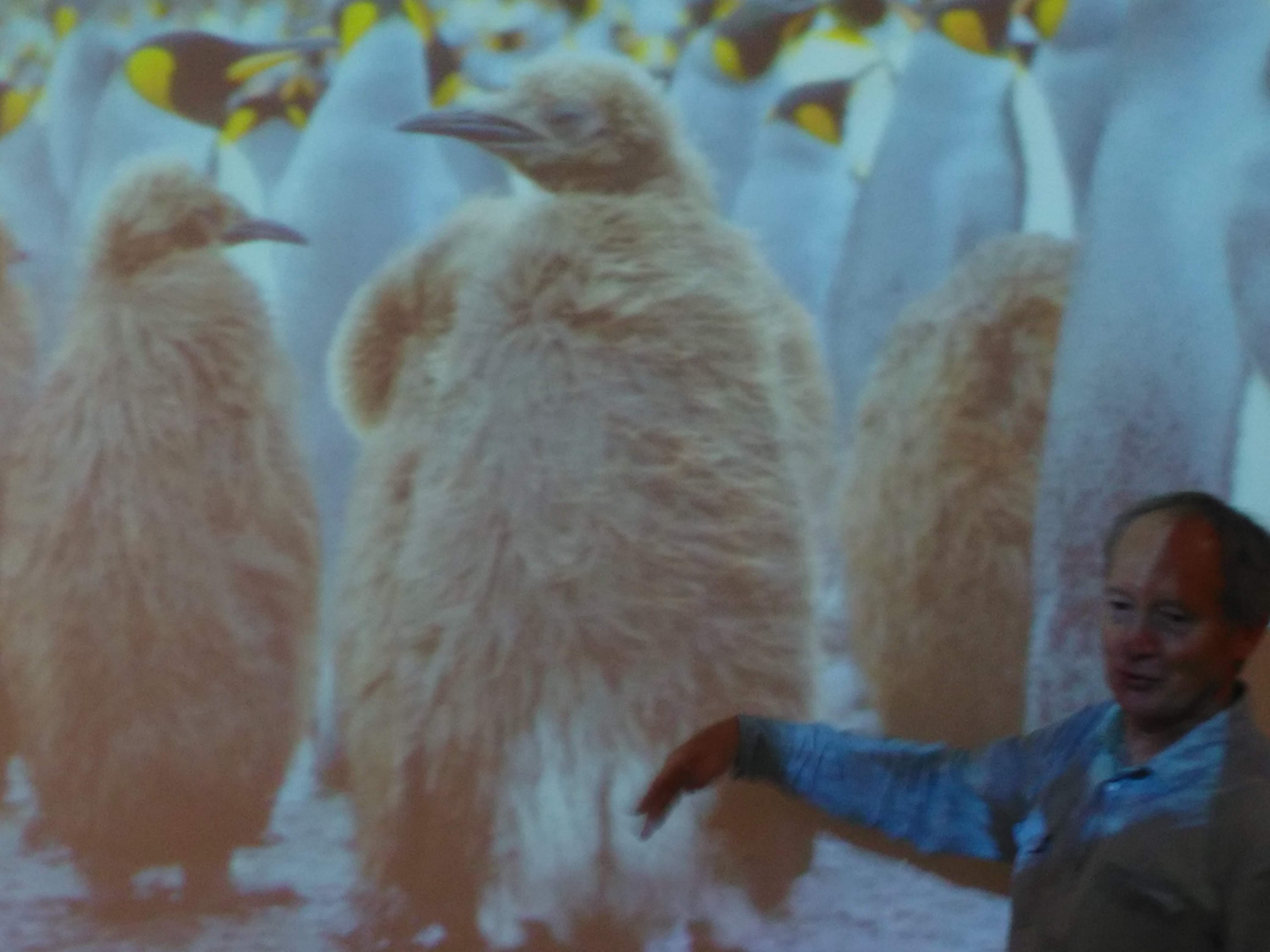 Projet : «Les pôles»