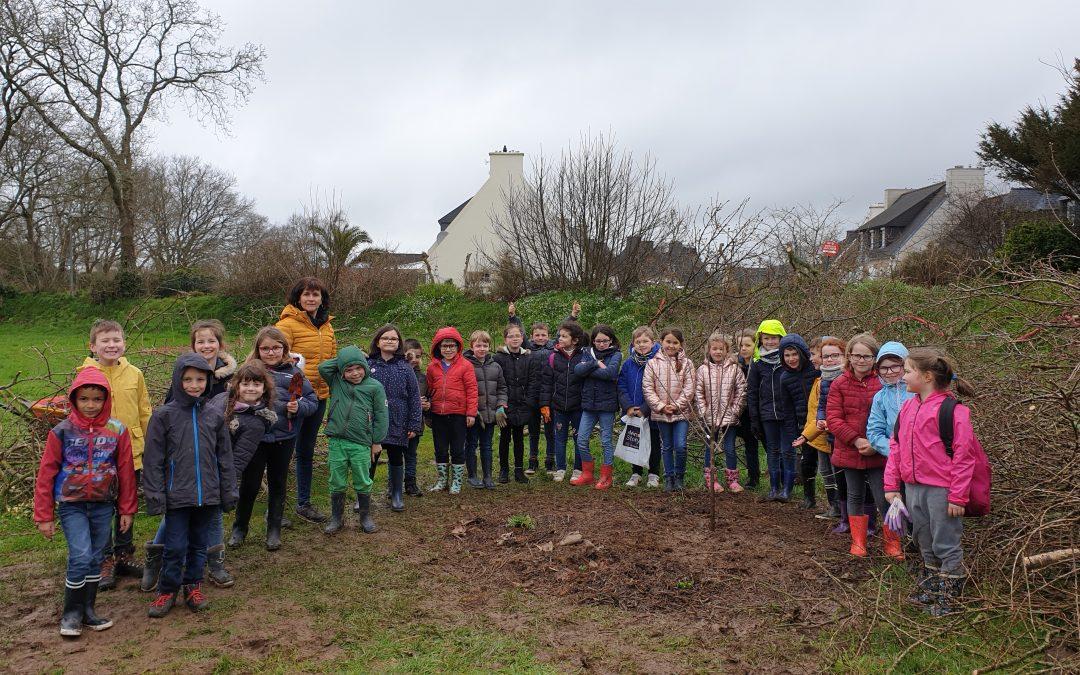 Plantons un arbre dans la Forêt des Comestibles